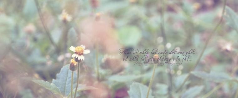 Hình chụp hoa một buổi mùa hè.